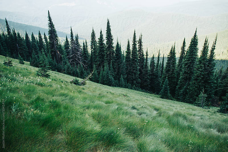 Alpine meadow on a steep mountain hill side.  by Justin Mullet for Stocksy United