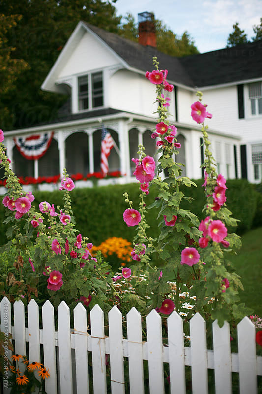 White Picket Fence and Hollyhocks by ALICIA BOCK for Stocksy United