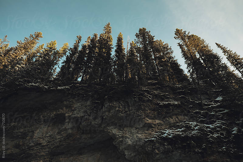 Pine trees stand tall on the edge of a rocky cliff by Riley J.B. for Stocksy United