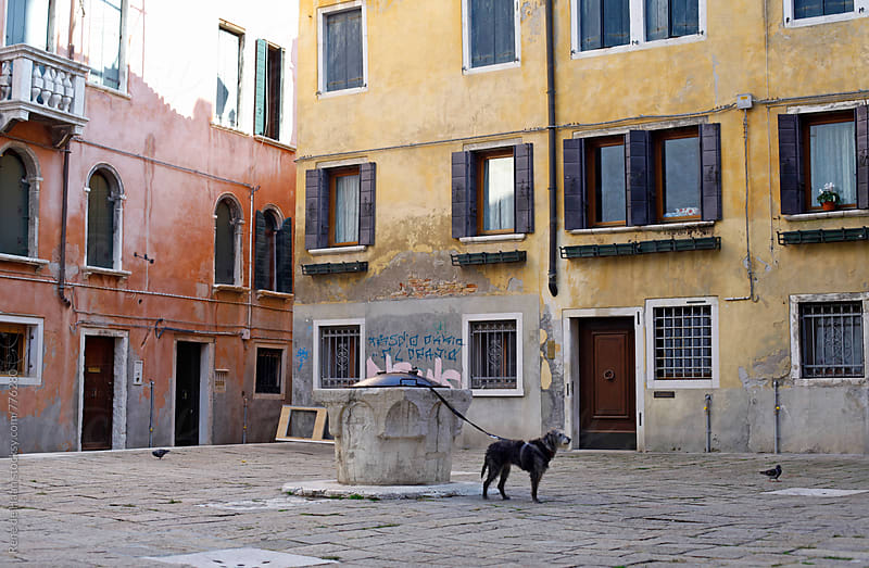 dog waiting for it's owner on street, Venice, Italy by Rene de Haan for Stocksy United
