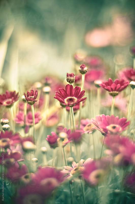 Vibrant spring flowers bloom pink on bright green stems by Rachel Bellinsky for Stocksy United