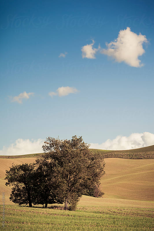 Tuscany Landscape. Italy by HEX. for Stocksy United