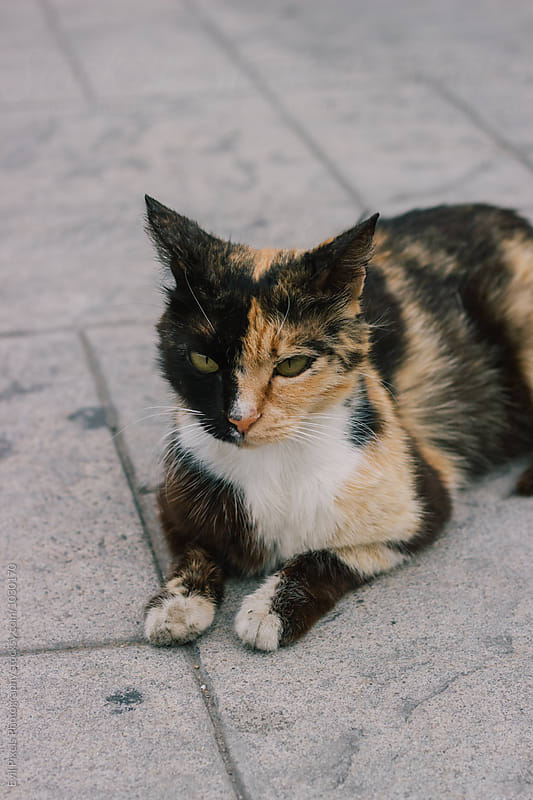 Beautiful stray cat on the street by Branislava Živić for Stocksy United