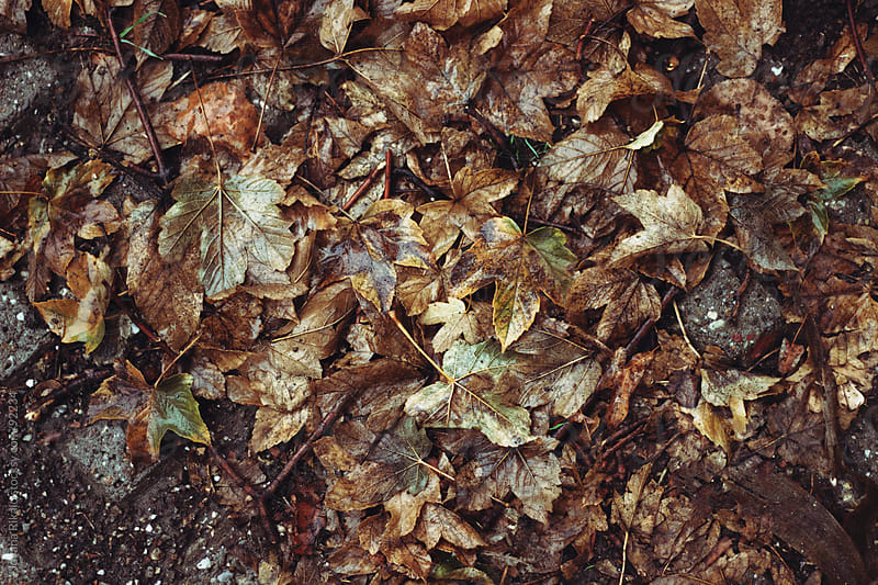 Wet leaves on concrete by Jovana Rikalo for Stocksy United
