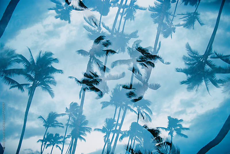 double exposure of palm trees against blue sky on film by wendy laurel for Stocksy United
