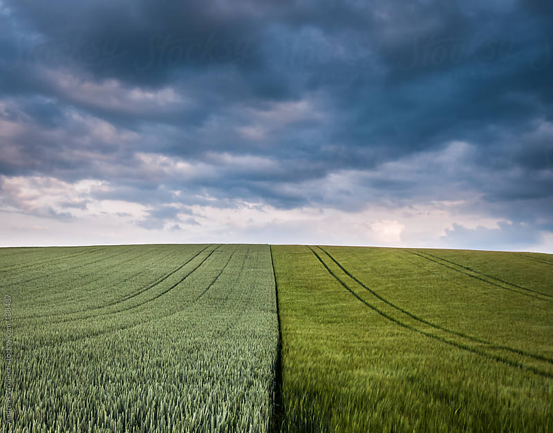 Fields of corn in spring with thunderstorm by Andreas Wonisch for Stocksy United