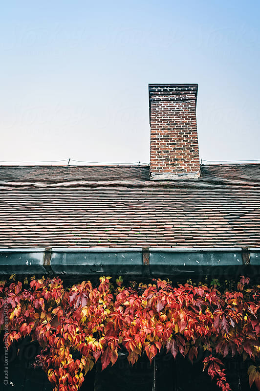 Rooftop with Virginia Creeper by Claudia Lommel for Stocksy United