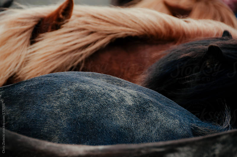 Horses on Iceland by Christian Zielecki for Stocksy United