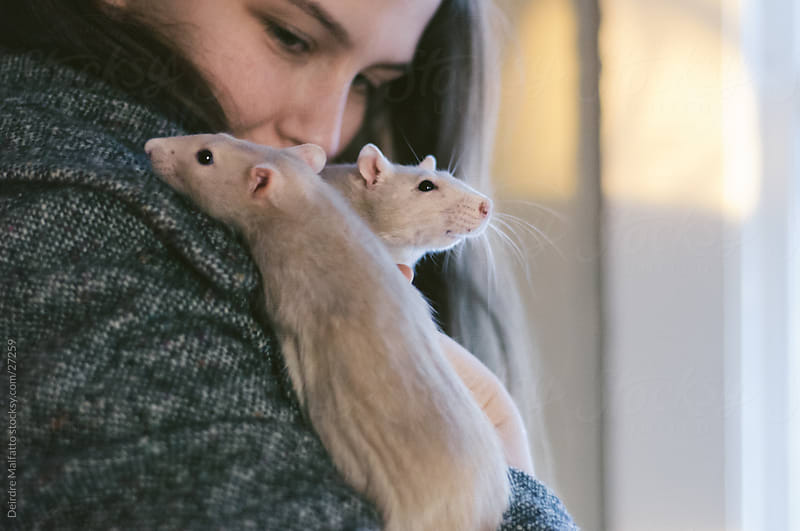 Girl Cuddling Two Pet Rats by Deirdre Malfatto for Stocksy United