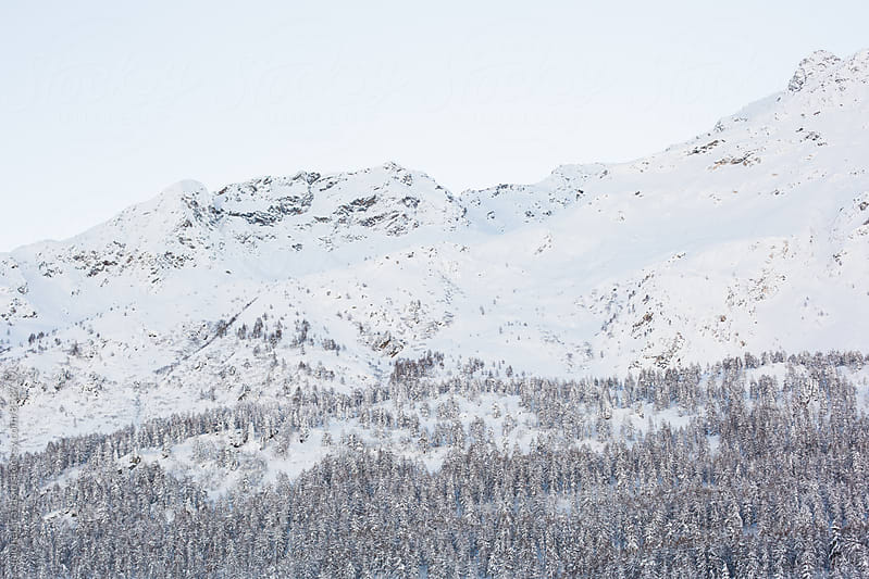 Coniferous forest on the slopes of a snow-covered mountain by michela ravasio for Stocksy United