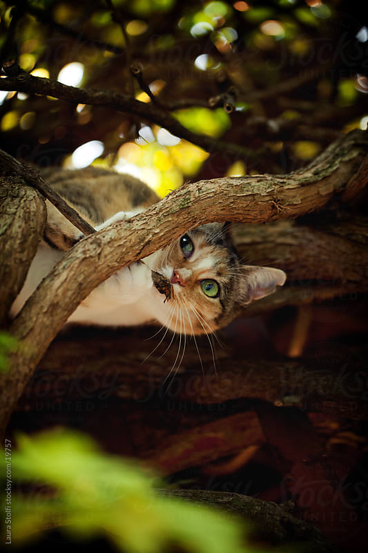 Tabby cat having fun on tree in garden by Laura Stolfi for Stocksy United