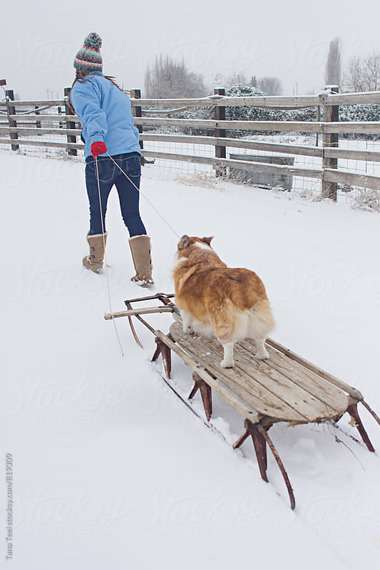 person pulling small dog on old wooden sled in snow by Tana Teel for Stocksy United