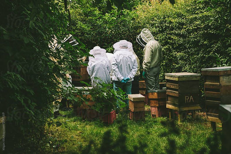 Group of beekeepers in an apiary by kkgas for Stocksy United
