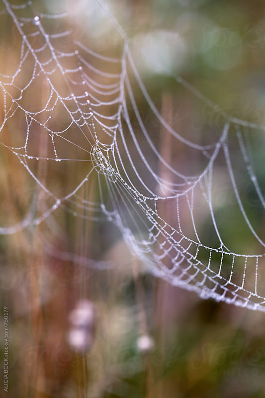 Details Of A Beautiful Spider Web In An Autumn Field by ALICIA BOCK for Stocksy United