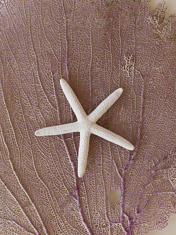 Coral texture and white starfish by Daniel Hurst for Stocksy United