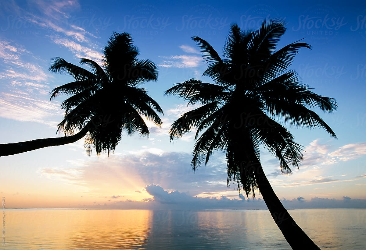 leaning palm trees at sunset anse severe la digue seychelles