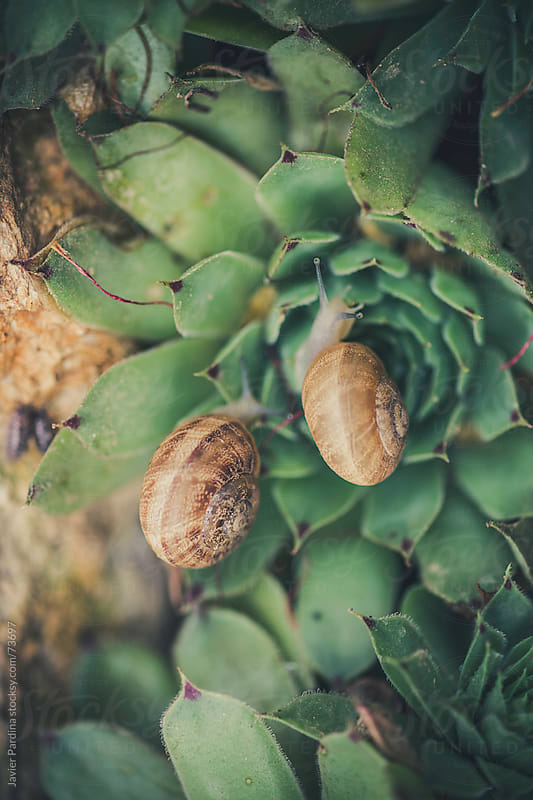 scene of a snail race by Javier Pardina for Stocksy United