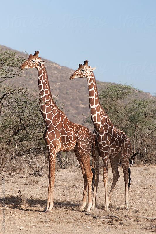 Samburu by Anthon Jackson for Stocksy United