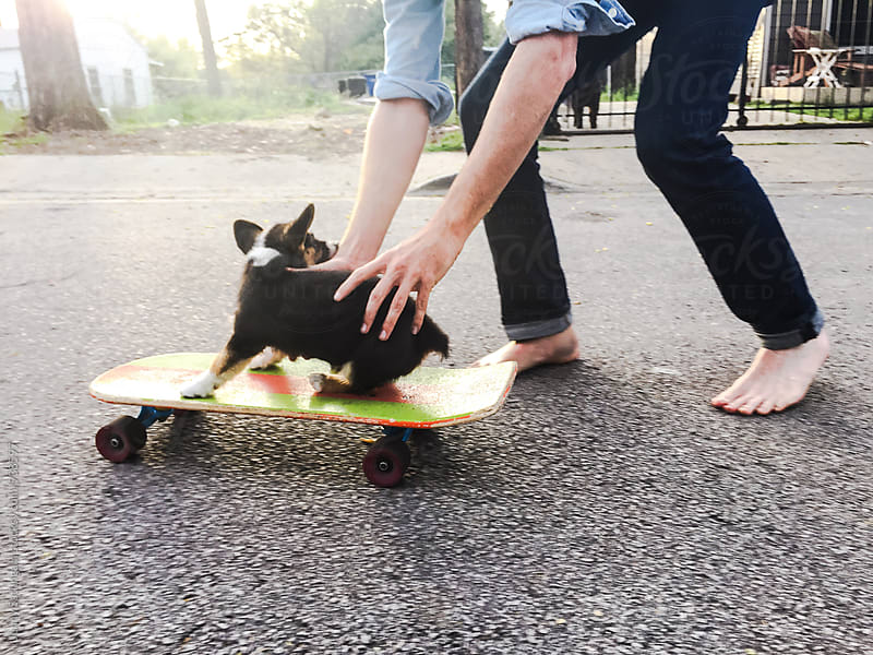 Corgi puppy learns to skateboard 2 by Jenny Sathngam for Stocksy United