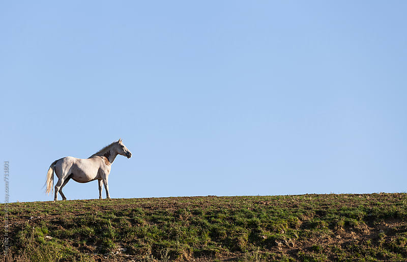 White horse on a hill at sunset by Marilar Irastorza for Stocksy United