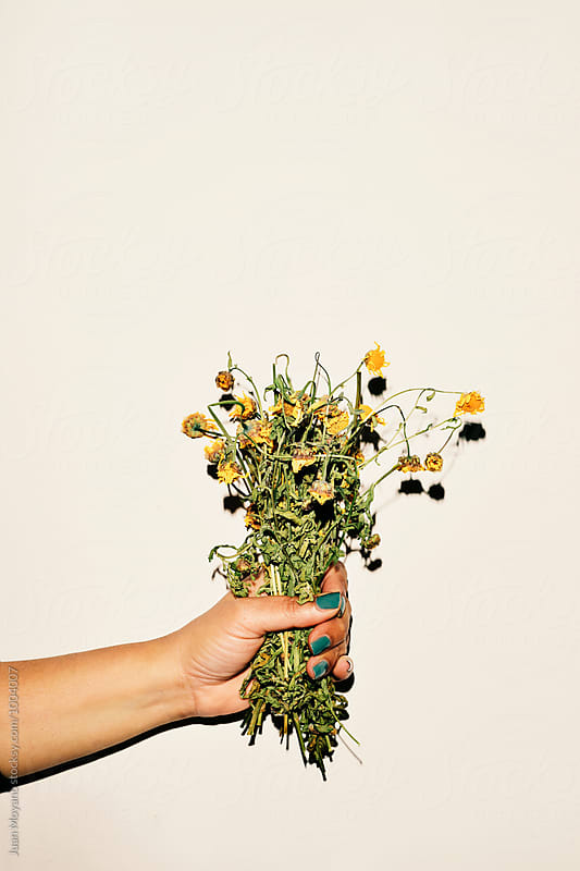 dead flowers by Juan Moyano for Stocksy United