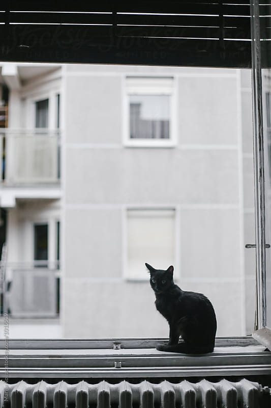 Black cat sitting on the window  by Marija Kovac for Stocksy United