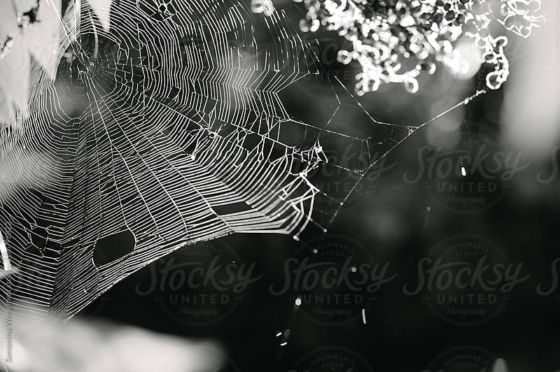 black and white web by Samantha Wesselhoft for Stocksy United