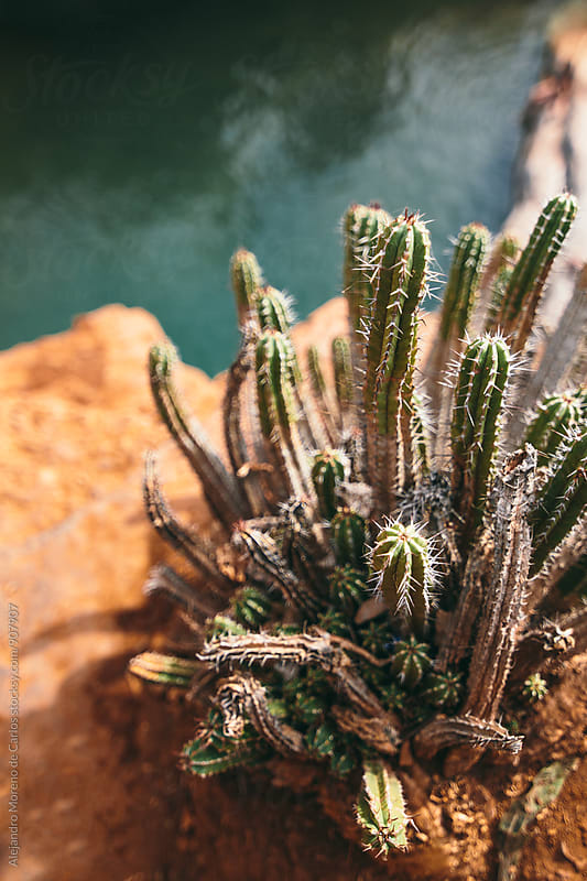 Detail of a cactus in the desert above natural pool of a river by Alejandro Moreno de Carlos for Stocksy United