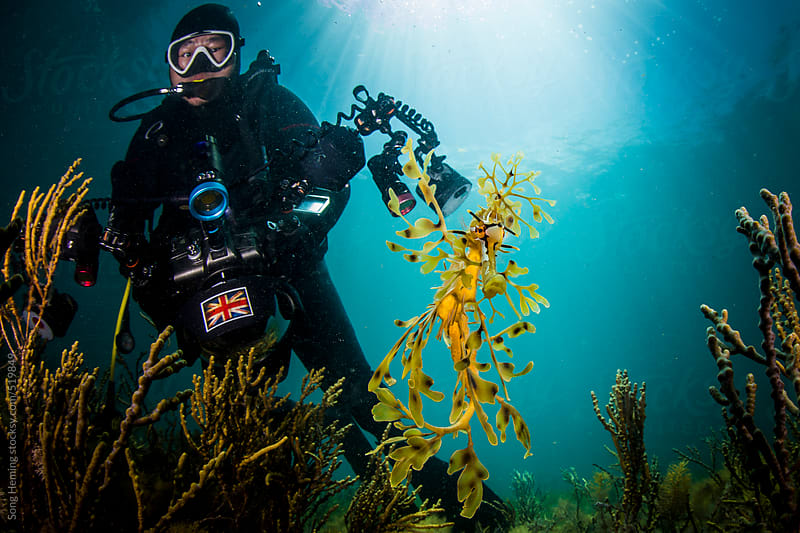 photographer and leafy sea dragon  by Song Heming for Stocksy United