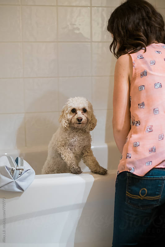 A cute puppy with dirty paws is washed in a bathtub by its owner. by Riley J.B. for Stocksy United