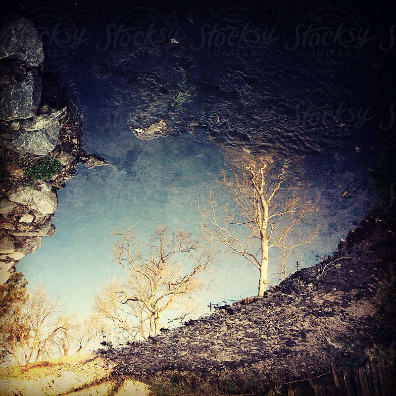Reflected View of Trees in Puddle of Water by Leigh Love for Stocksy United