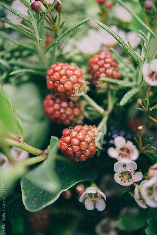 Close-up of berries on a bridal bouquet by Adrian Cotiga for Stocksy United
