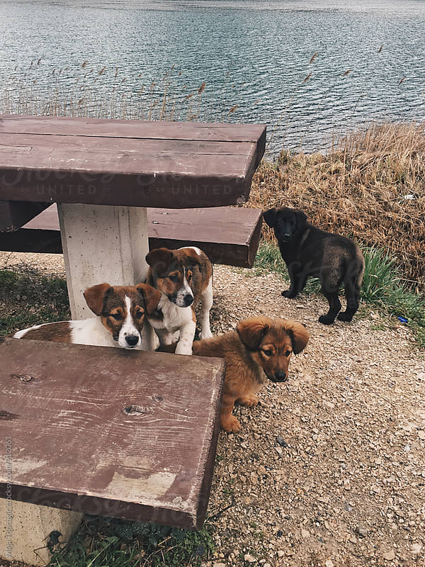 Little puppies near a lake by Maja Topcagic for Stocksy United