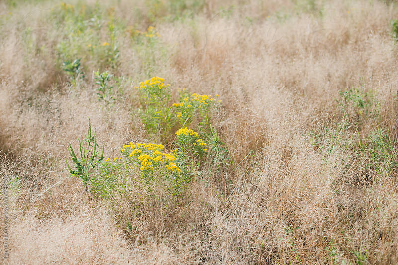Flowers, soft grass and weeds in field by Lauren Naefe for Stocksy United