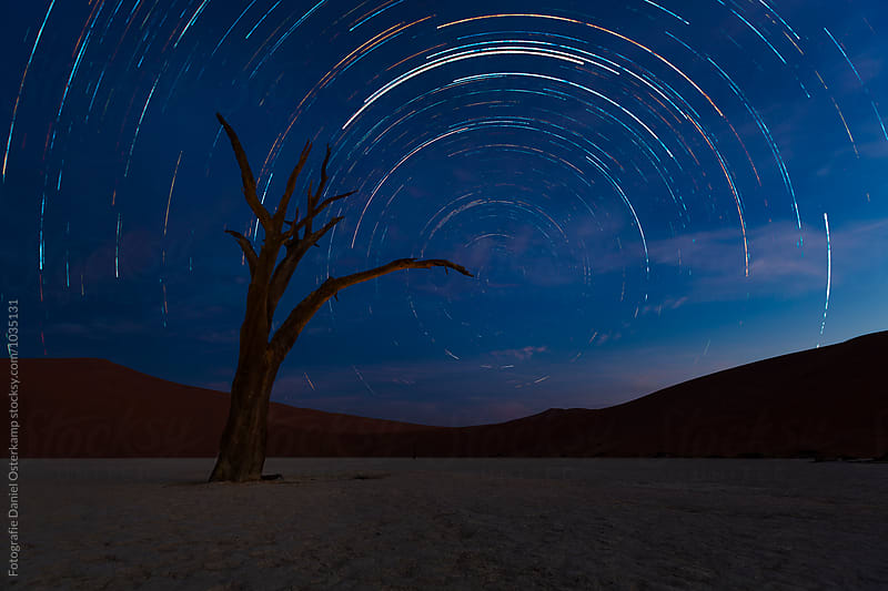 Dead Camelthorn Trees against blue night sky in Deadvlei, Sossusvlei. Namib-Naukluft National Park, Namibia, Afrika. by Fotografie Daniel Osterkamp for Stocksy United