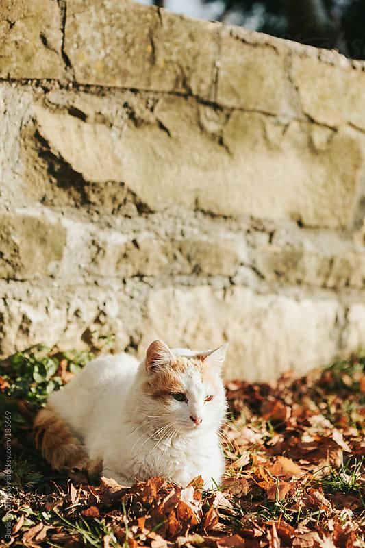 Cat nestled in the leaves by Borislav Zhuykov for Stocksy United