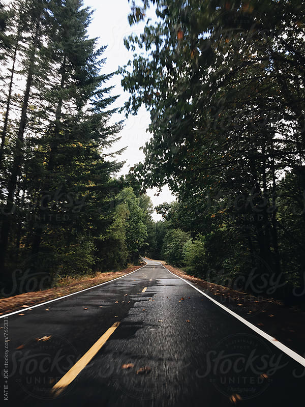 Wet road lined with pine trees by KATIE + JOE for Stocksy United