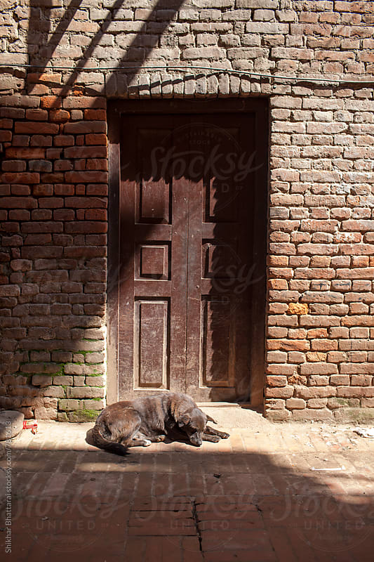 A street dog warms itself early morning in an alley of Patan as winter sets in. by Shikhar Bhattarai for Stocksy United