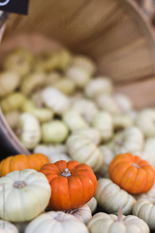 Tiny white and orange ornamental pumpkins in a grocery bin. by Holly Clark for Stocksy United