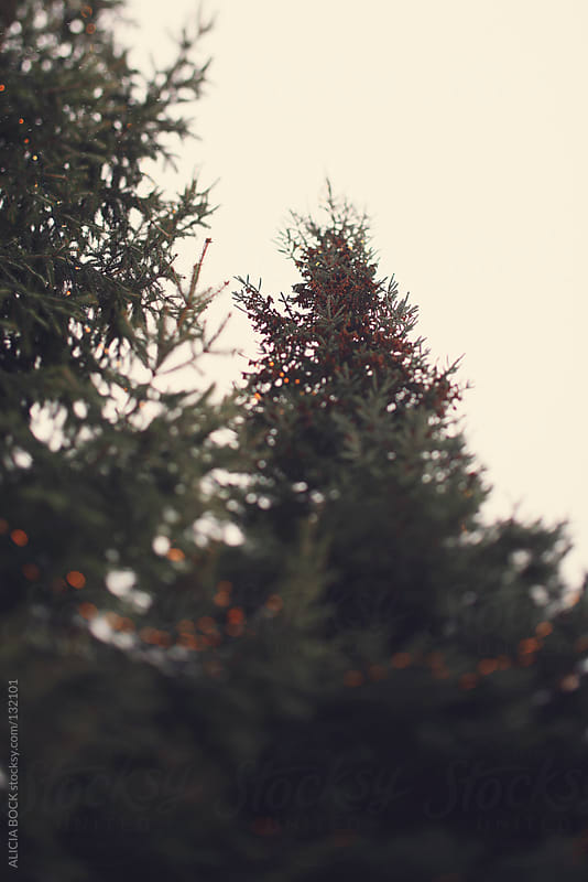 Lights On The Tree - Vertical by ALICIA BOCK for Stocksy United