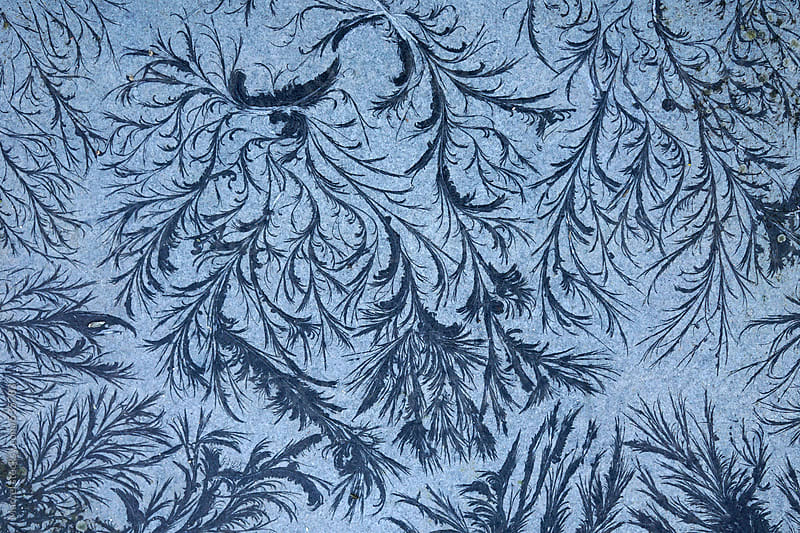 remarkable organic frost patterns by Marcel for Stocksy United