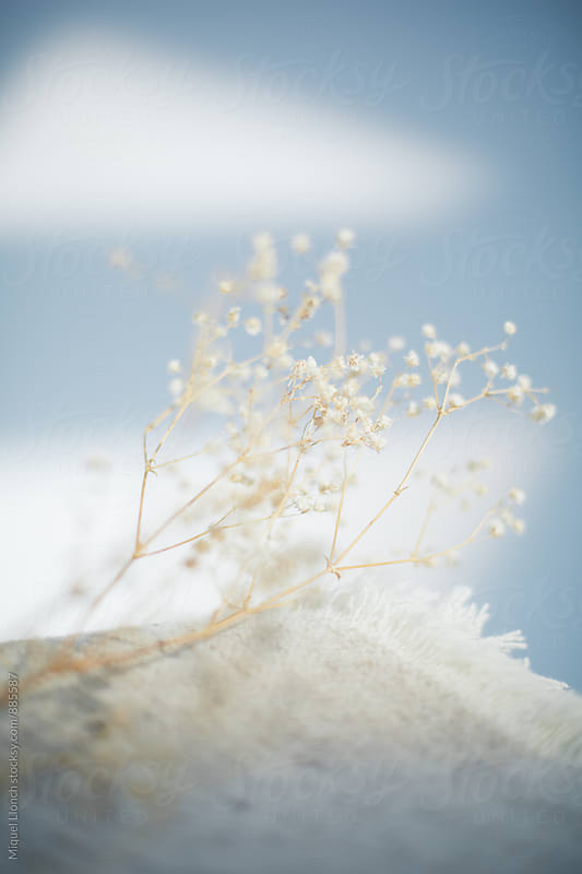 Detail of dry flowers with wool blanket by Miquel Llonch for Stocksy United