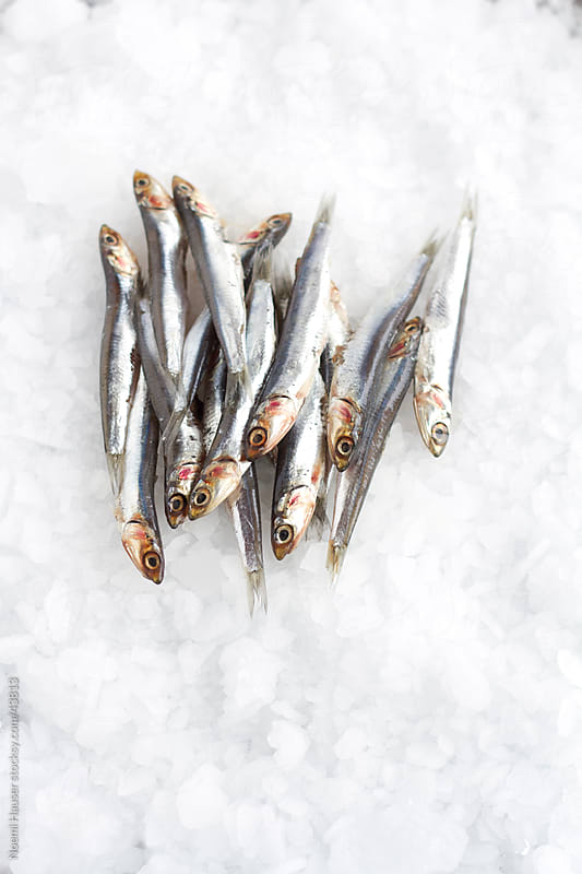 Anchovies on ice by Noemi Hauser for Stocksy United