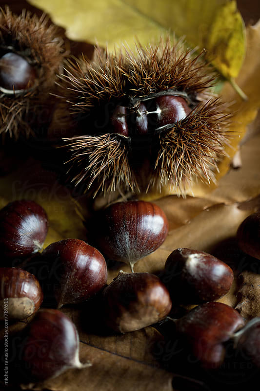Chestnuts on chestnut tree leaves by michela ravasio for Stocksy United
