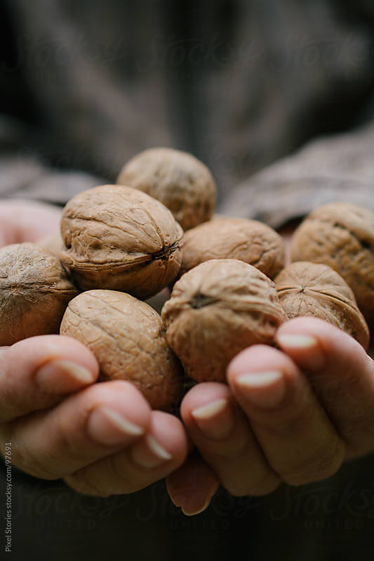 Hands holding walnuts by Pixel Stories for Stocksy United