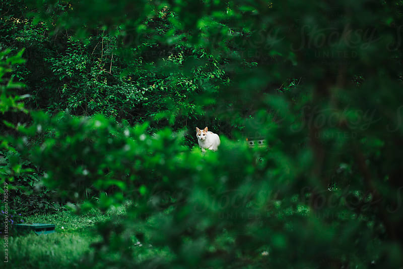 Cat relaxing in garden seen through tree branches by Laura Stolfi for Stocksy United