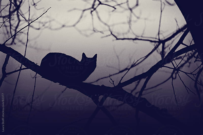 Bewitched: silhouette of cat perching on leafless branch in misty wood at night by Laura Stolfi for Stocksy United
