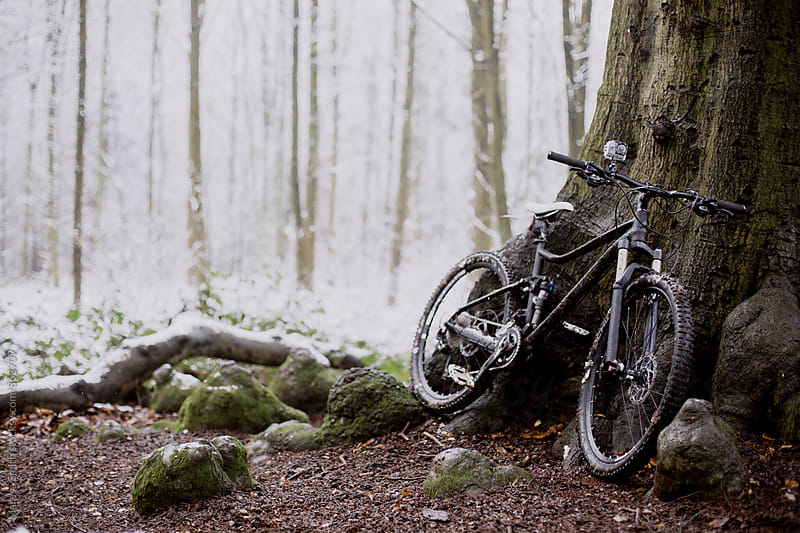 A mountain bike leaning against a tree in a snowy forest by Maresa Smith for Stocksy United