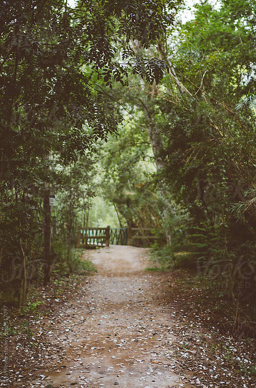 Road in a park trough the forest. by Eva Plevier for Stocksy United