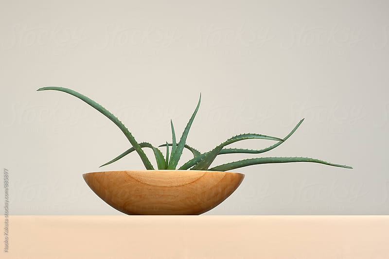 aloe in a wooden bowl by Naoko Kakuta for Stocksy United